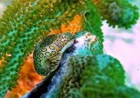 underwater leopard…